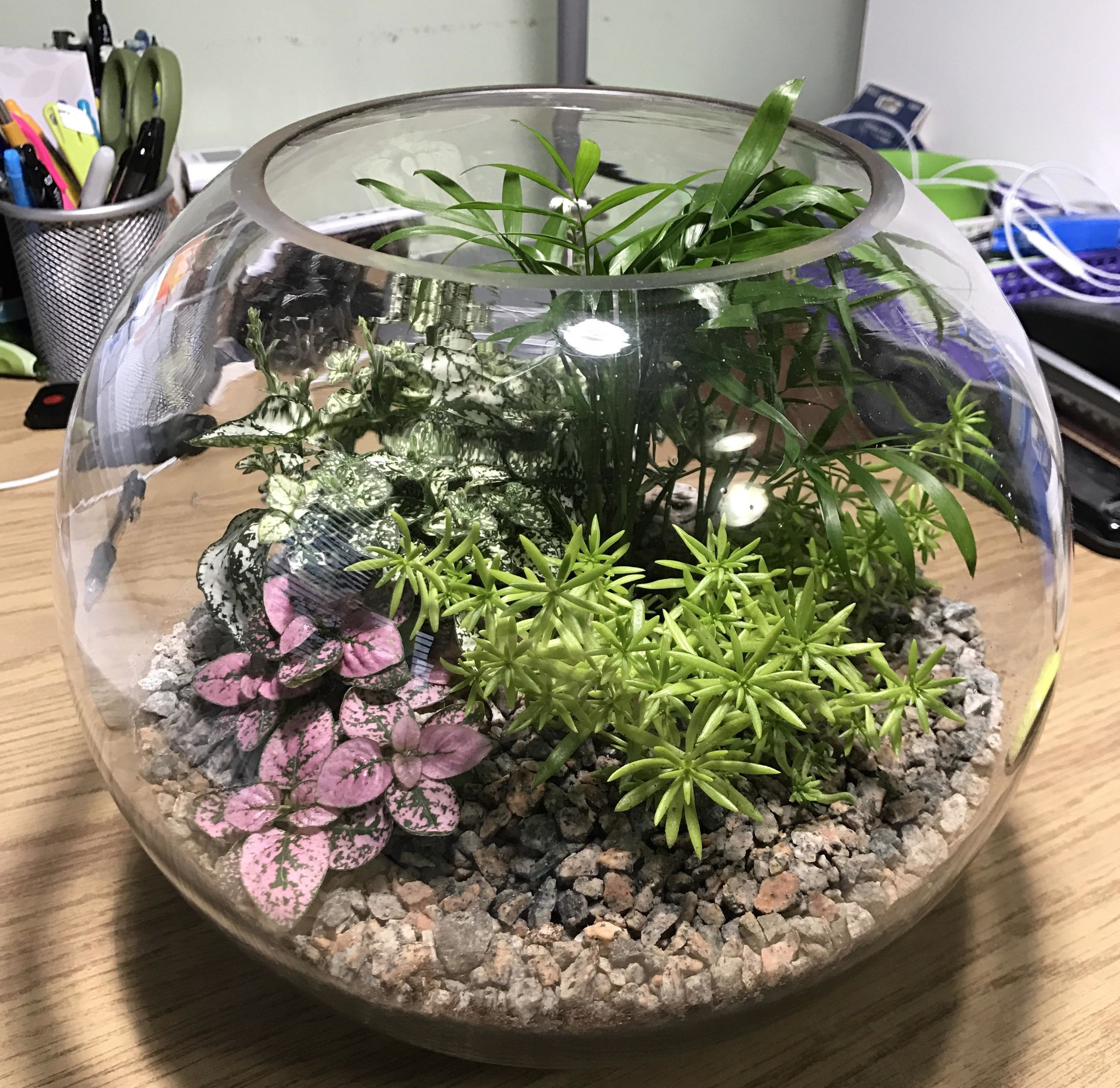 Wine Down Wednesday - Make your own Terrarium